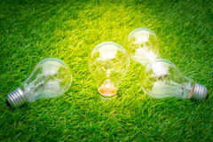 Eco concept - light bulb grow in the grass. Royalty Free Stock Photos