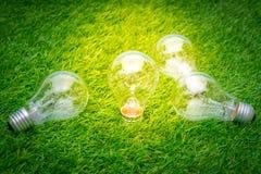 Eco concept - light bulb grow in the grass. Royalty Free Stock Photos