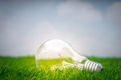 .Eco concept - light bulb grow in the grass against blue sky Royalty Free Stock Image