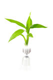 Eco concept: light bulb with plant inside. Isolated on white Stock Photography