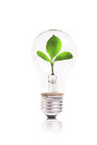 Eco concept: lightbulb with green plant inside. Light bulb with plant inside. isolated on white Royalty Free Stock Images