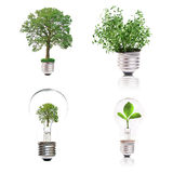 Eco concept: variety of light bulbs with plant ins. Ide isolated on white background Stock Photos