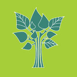 Eco concept. Vector trees with green leaves. Vector graphic illustration. Nature and organic product Stock Images