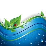 eco de fond Image stock