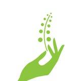 Eco della pianta e della mano Fotografia Stock