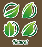 Eco design. Eco grafic design, vector illustration Royalty Free Stock Photo