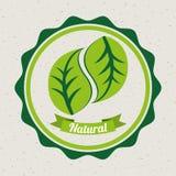 Eco design. Eco  grafic design, vector illustration Stock Images