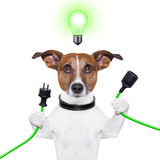 Eco dog. Green energy dog with a cable and a light bulb Stock Images