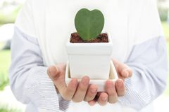 Eco e concetto organico Albero in forma di cuore a disposizione, ragazza Foglia verde di forma del cuore in mani della ragazza immagini stock libere da diritti