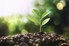 Free Eco Earth Day Concept. Tree Growing In Nature With Morning Light Royalty Free Stock Image - 150731936