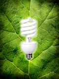 Eco energy. Compact-fluorescent light bulb on green leaf background Royalty Free Stock Image