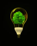 Eco energy. Electronics lamp with tree inside Royalty Free Stock Photography