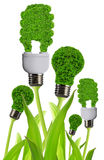 Eco energy bulb Stock Photography