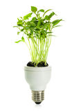 Eco energy bulb. Royalty Free Stock Photos