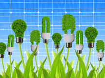 Eco energy bulbs. On the background solar panel Royalty Free Stock Images