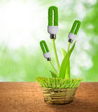 Eco energy bulbs Stock Images