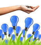 Eco energy bulbs Stock Image