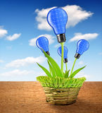 Eco energy bulbs Stock Image