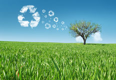 Eco energy concept. Eco concept in the grass, recycle concept Stock Photography