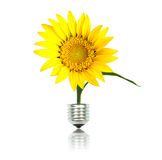 Eco energy concept. Yellow sun flower with bulb, eco energy concept Royalty Free Stock Photography