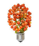 Eco energy concept. Lamp with plant showing eco energy concept Royalty Free Stock Photography