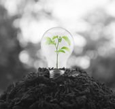 Eco energy concept. Light bulb with small green leaf plant inside on pile of soil over blur tree, Eco energy concept Stock Photos
