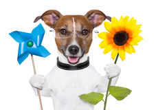 Eco energy dog. Eco green energy dog with windmill and sunflower Stock Photography