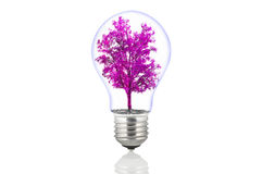 Eco energy lamp. On white Stock Image