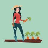 Eco för bondeWoman Gather Carrot skörd lantbruk royaltyfri illustrationer