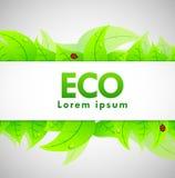 Eco Fahne Lizenzfreie Stockfotos