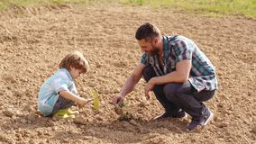 Eco farm worker - father and son concept. Cute father and son working with spud on spring field. Eco Resort Activities stock video footage