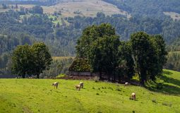Eco farming in country side on Romanian mountains royalty free stock images