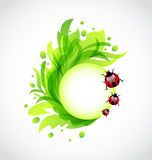 Eco floral transparent background with ladybugs Royalty Free Stock Photography