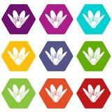 Eco flower icons set 9 vector. Eco flower icons 9 set coloful isolated on white for web royalty free illustration
