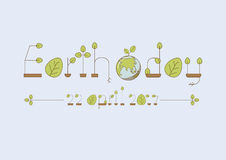 Eco font.Thin line alphabet with green leaves. Stock Images
