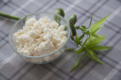 Eco food: cottage cheese Royalty Free Stock Photos