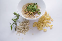 Eco food. Germs in a plate, healthy live food photo with copy space for text Stock Image