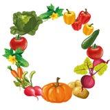 Eco food menu background. hand drawn vegetables. Vector illustration Stock Image