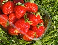 Eco food Stock Photography
