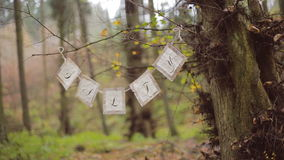 Eco forest wedding salty bar stock video footage
