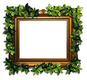 Eco frame. Gold frame with green leaves Royalty Free Stock Photo