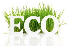 Eco with fresh grass Stock Image