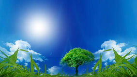 Eco Friendly. Eco background for your design Stock Image