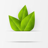 Eco friendly background with green leaves Royalty Free Stock Photos