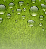 Eco friendly background with water drops on fresh green grass te Royalty Free Stock Photography
