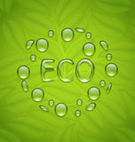 Eco friendly background with water drops on fresh green leaves t Stock Image