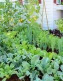 Eco-friendly backyard garden Royalty Free Stock Image