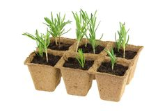 Eco Friendly and Biodegradable Plant Pots Stock Photo