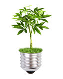 Eco friendly bulb. A tree with green leaves growing from bulb cup on white background Stock Photos