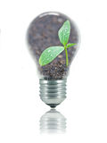 Eco friendly bulb. Small plant with water drops and relfection of sunshine in a light bulb isolated on white to represent eco friendly energy Stock Images